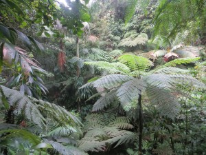 Rainforest Closeup