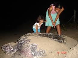 turtle with child