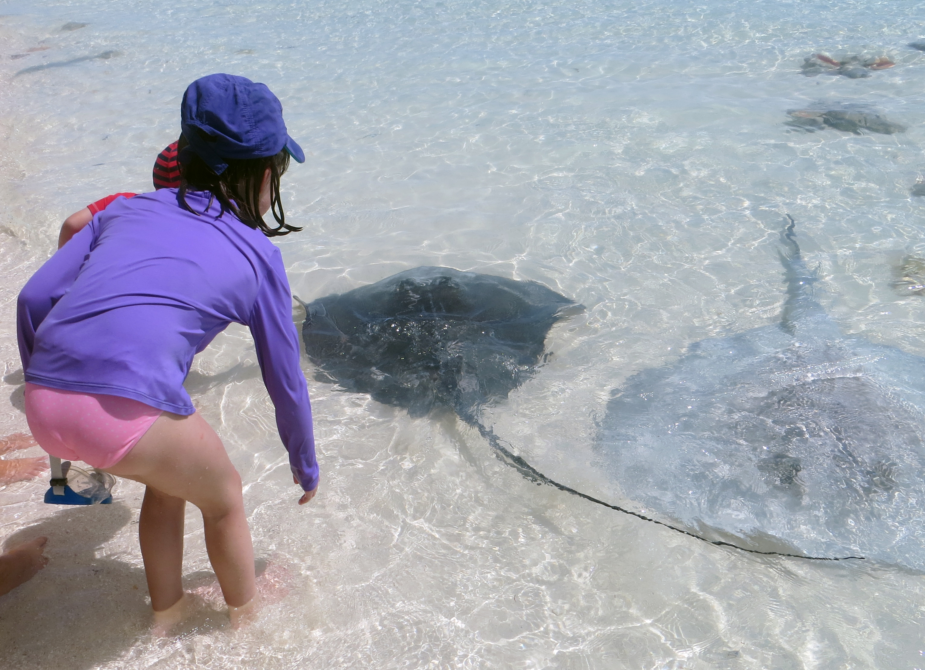 child with stingray