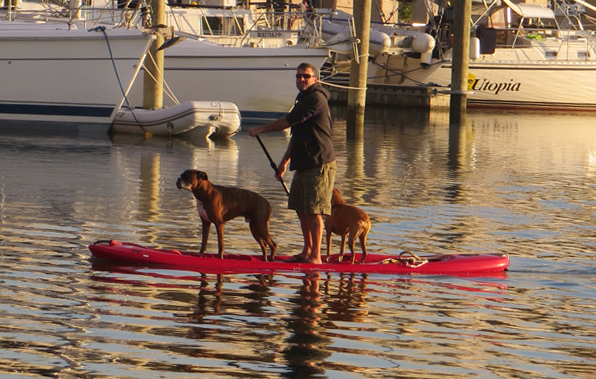 Paddle with dogs