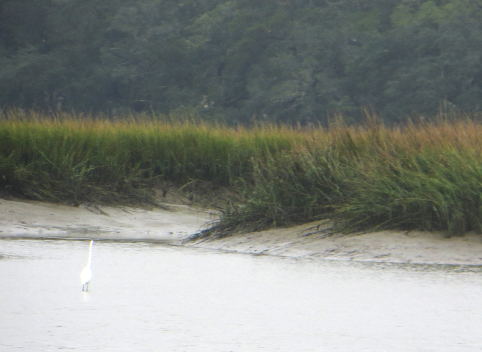 Spartina grass marsh